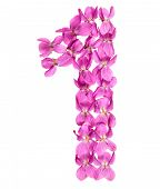 Arabic Numeral 1, One, From Flowers Of Viola, Isolated On White Background poster