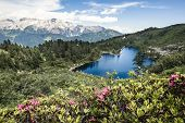 Beautiful Flowers In Mountains, Clear Lake In Mountains, Italian Mountain Background, Gorgeous Lands poster