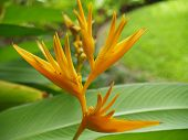 foto of hawaiian flower  - The flower head of the bold and colorful bird - JPG