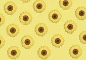 Bloom  Pattern From  Sunflowers Or Beautiful  Spring  Vibrant Floral Background. Summer Design. Conc poster