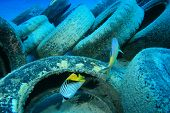 Pollution in ocean environmental problem. Car tyres dumped on coral reef in sea.  poster
