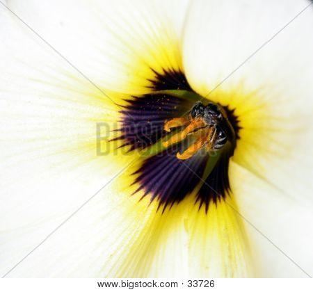 Macro Shot Of A Bee Harvesting Nectar