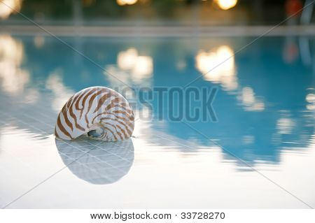 nautilus shall at swimming pool edge, super shallow dof, sun ref