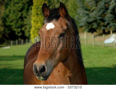 Horse Powys