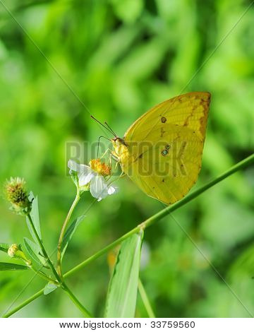 Buterfly on a flower
