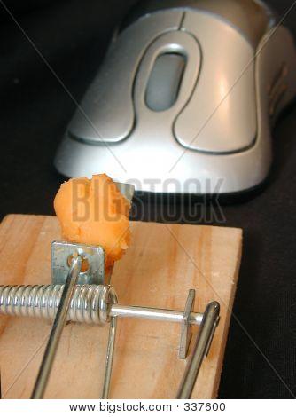 Mouse Mouse Trap
