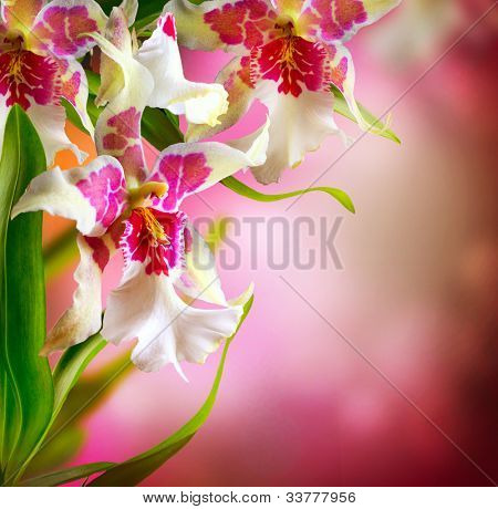 Orchid Flowers Design