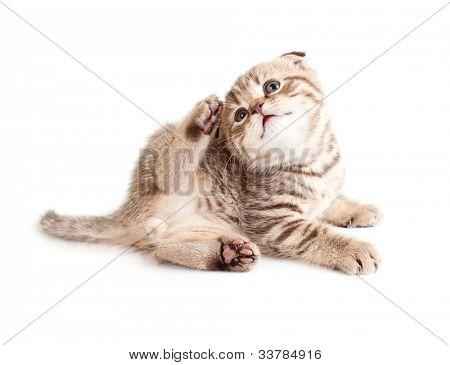 schattig kitten krassen of jeuk zelf. Kitten van seks is zichtbaar op foto.