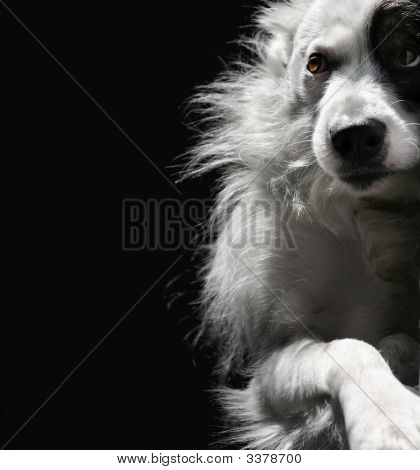 Portrait Of Lonely Dog On A Dark Background