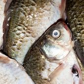 Live Fish Crucian.background Live Fresh Fish.fish Crucian.fresh Freshwater Fish.background Of Fresh  poster