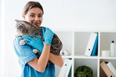 Smiling Veterinarian Looking At Camera While Holding Grey Tabby Cat On Hands poster