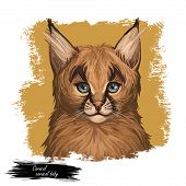 Caracal Baby Tabby, Wild Cat Isolated Digital Art Illustration. Wild Cat From Africa, Middle East, C poster