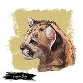 Cougar Baby Tabby, Large Felid Isoated Wildlife Cat. Digita Art Illustration Of Mountain Lion, Puma, poster