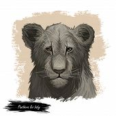 Panthera Leo Watercolor Baby Tabby Portrait In Closeup. Mammal With Black Furry Coat Feline Animal.  poster
