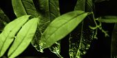 Plant Branches With Green Leaves Close Up View. Natural Environment, Ecology, Lush Forest Trees Foli poster