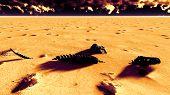 picture of sandstorms  - Dinosaur bones lying on desert - JPG