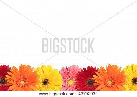 Colorful Daisy Border