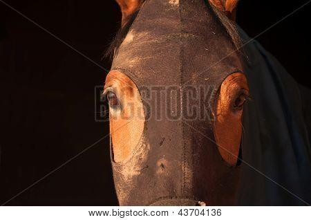 Horse Hood