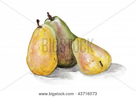 Yellow  And Green Pears Fruits Isolated