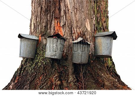 Old Fashioned Maple Sap Buckets