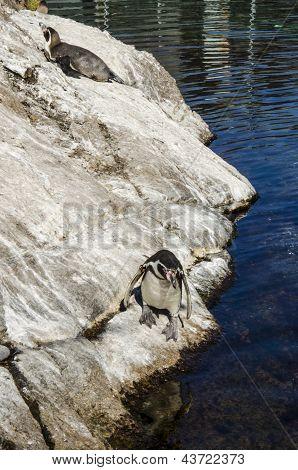 Penguins - loyal relationships