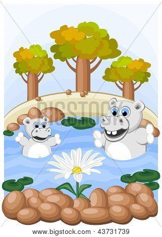 Hippos admire unusual chamomile