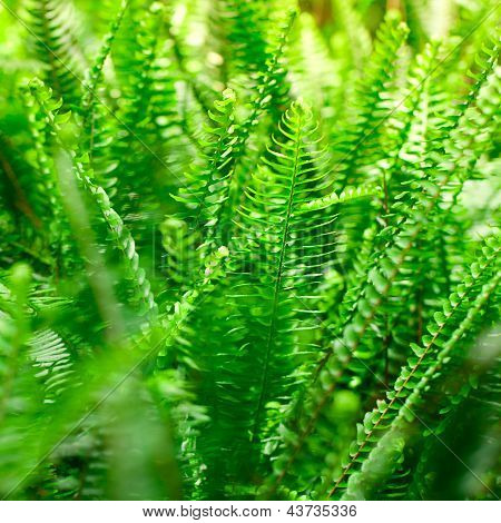 Fern In The Rainforest