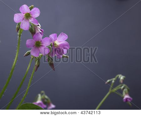 Protect basin grass flower
