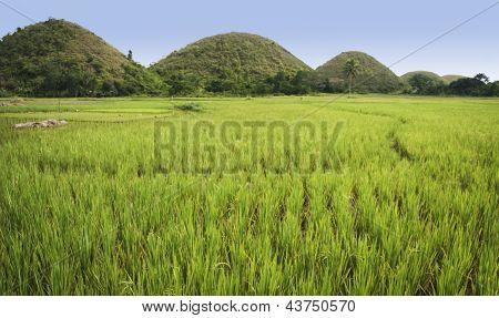 Bohol Chocolate Hills Panorama Philippines