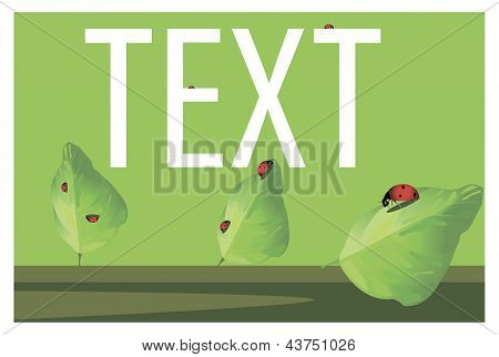 Ladybugs on the leaves