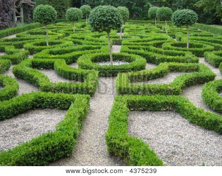 Garden Art/ Design/ Landscape.trees. Box Hedge. Shape