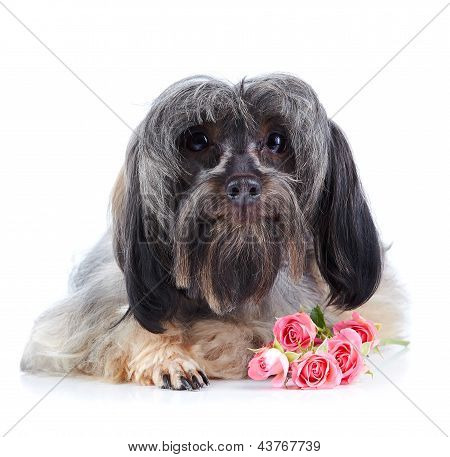 Portrait Of A Decorative Dog With Pink Roses.