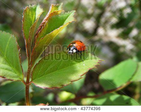 bedbug on sheet