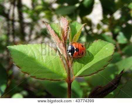 bug on sheet in garden