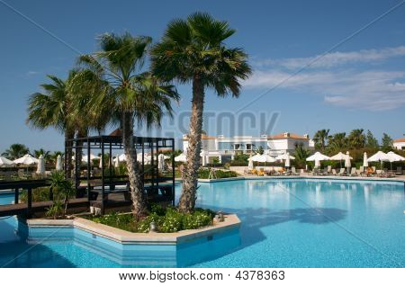 Palm Tree In Pool