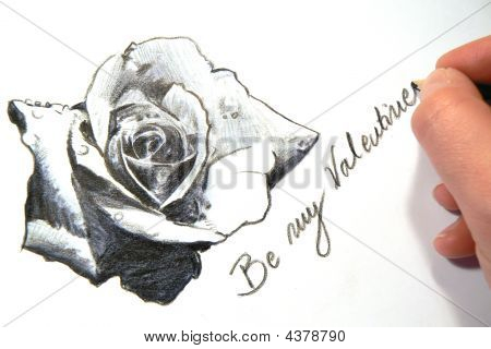 Sketch Of A Valentine Rose