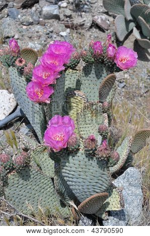 Colorful stand of cactus