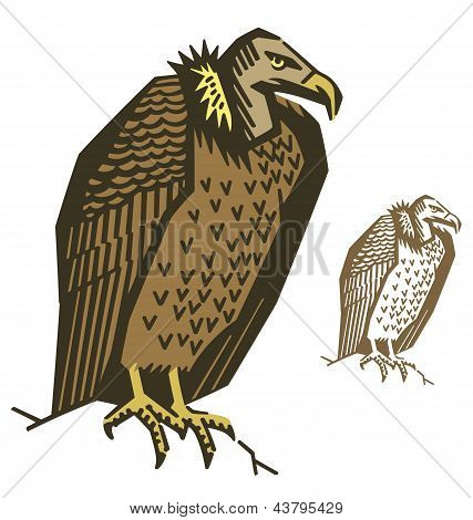 Vulture Bird Vector