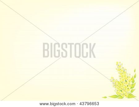 Beautiful Cassia Fistula Flower Isolated On Yellow Background