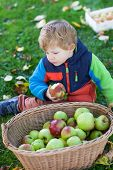 foto of crips  - Little toddler boy with basket full of apples in autumn garden Germany - JPG