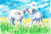 picture of spring lambs  - Two cute lambs on summer field - JPG