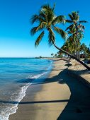stock photo of mauritius  - Palm tree overlooks a beach in Fiji - JPG