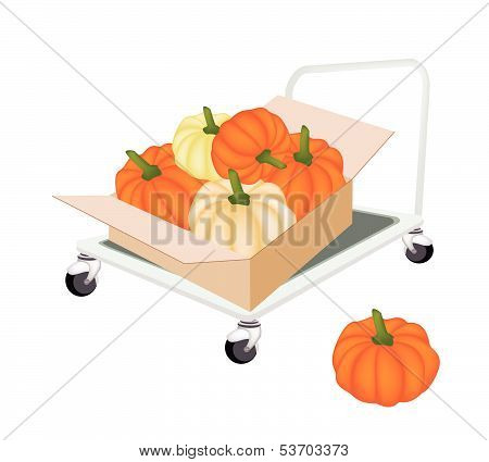 Hand Truck Loading Pumpkins In Shipping Box