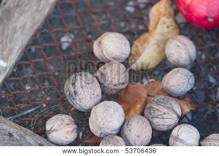 Walnuts On The Wire Netting