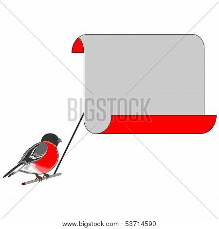 A Bullfinch With A Big Blank Paper For Congratulations