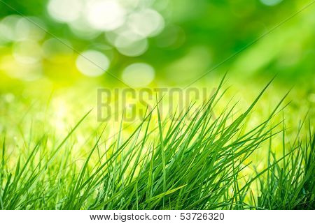 Clump Of Grass