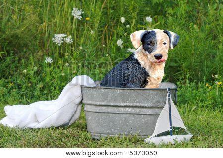 Yes, You Need A Bath!