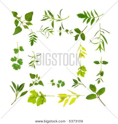 Herb Leaf Abstract