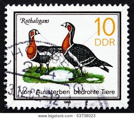 Postage Stamp Gdr 1985 Red-breasted Goose, Bird