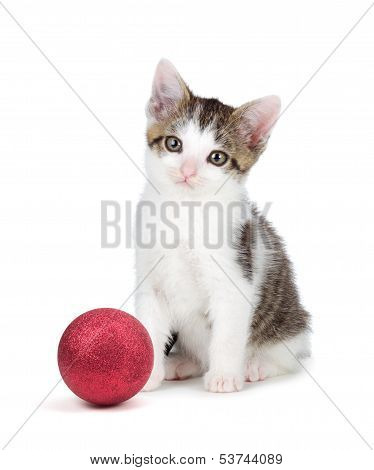 Cute Grey And White Kittensitting Next To A Christmas Ornament On A White Background.